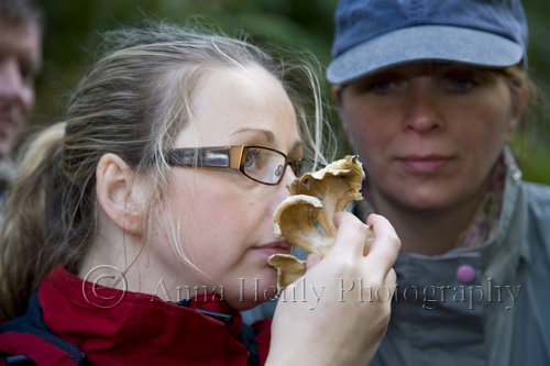 Anita Goldie sniffs a fungus to see if it smells of apricots or rotting flesh......
