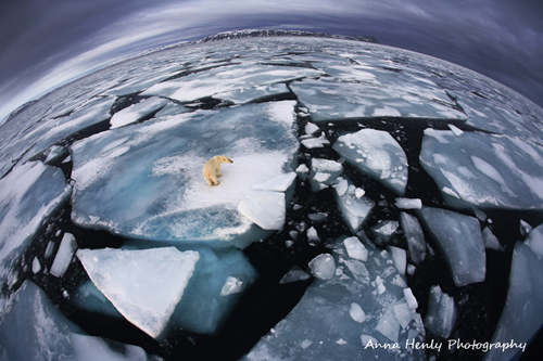 Wildlife Photographer of the Year 2012