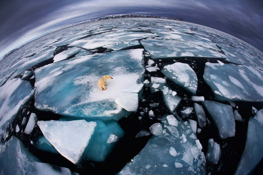 BBC Willife Photographer of the year 2012 - Ice Matters